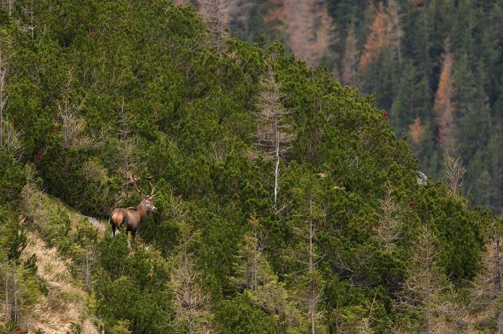 Red Deer Landscape